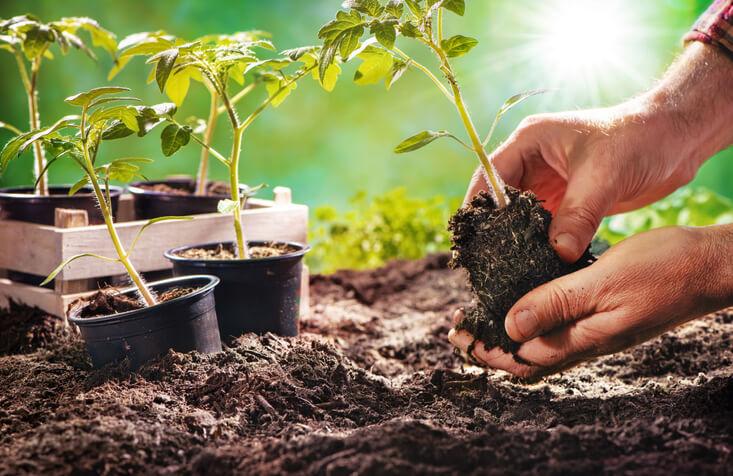 Odla i växthus - köpa växthus